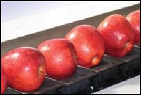 Linije jabuka