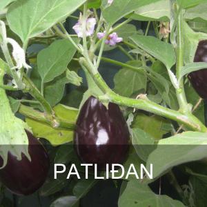 PATLIDAN